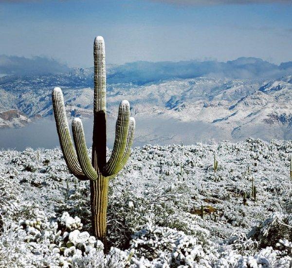 В пустыне Аризоны выпал снег