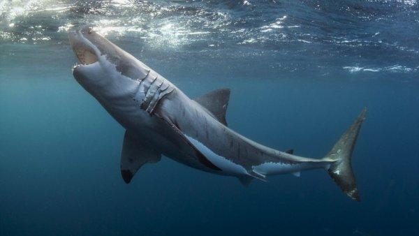 В США осудили рыбака за жестокое убийство большой белой акулы