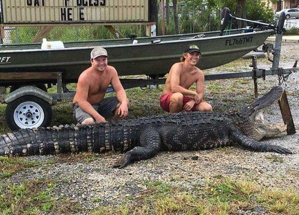 Во Флориде охотники поймали 350-килограммового аллигатора