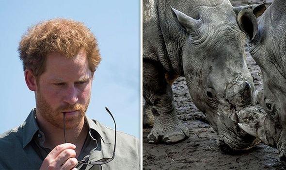 Принц Гарри мог погибнуть из-за нападения черного носорога – биограф