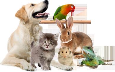 Купить ветеринарные препараты в Москве