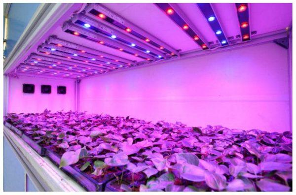 Большой выбор продукции для освещения растений