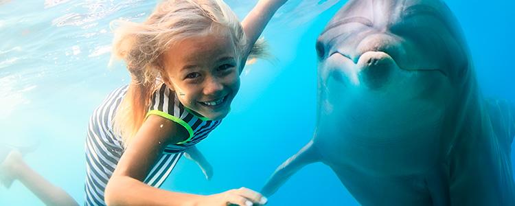 Чем является лечение с помощью дельфинов и почему оно так популярно