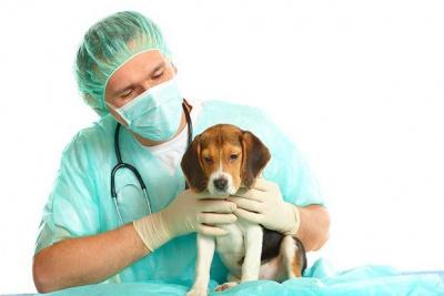 Ветеринарная клиника в Тюмени, услуги ветаптеки и зоогостиницы