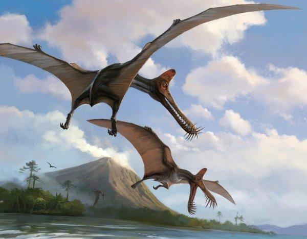 Над аномальным Розуэллом зафиксировали летающих динозавров